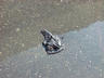 NYC, post snow storm - this glove lay in the middl...
