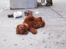 An unhappy bear, Broadway and 17th...